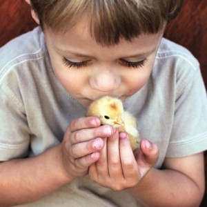 cute-boy-duckling-model