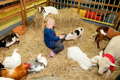 excursion-with-farm-animals